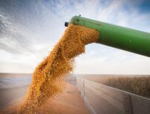 Milho: Mercado futuro segue com desvalorizações no pregão desta 3ª feira na CBOT