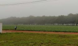 Tempo amanheceu nublado neste domingo em Chapadão do Céu
