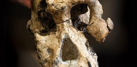 Por que crânio descoberto na Etiópia pode mudar o que sabemos sobre evolução humana