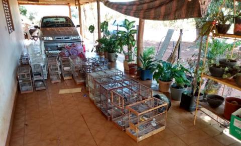 Polícia Militar Ambiental de Coxim e IMASUL autuam criador de pássaros em R$ 64 mil por manter aves silvestres em extinção ilegalmente em cativeiro