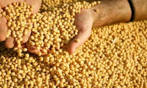 Revisão para baixo da produção de soja e milho de primeira safra em 2018/2019