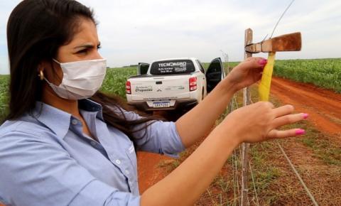 Cigarrinha do milho é mais um desafio aos produtores e técnicos