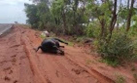 Fazendeiro é flagrado descartando gado morto às margens da BR 060 em Paraíso das Águas